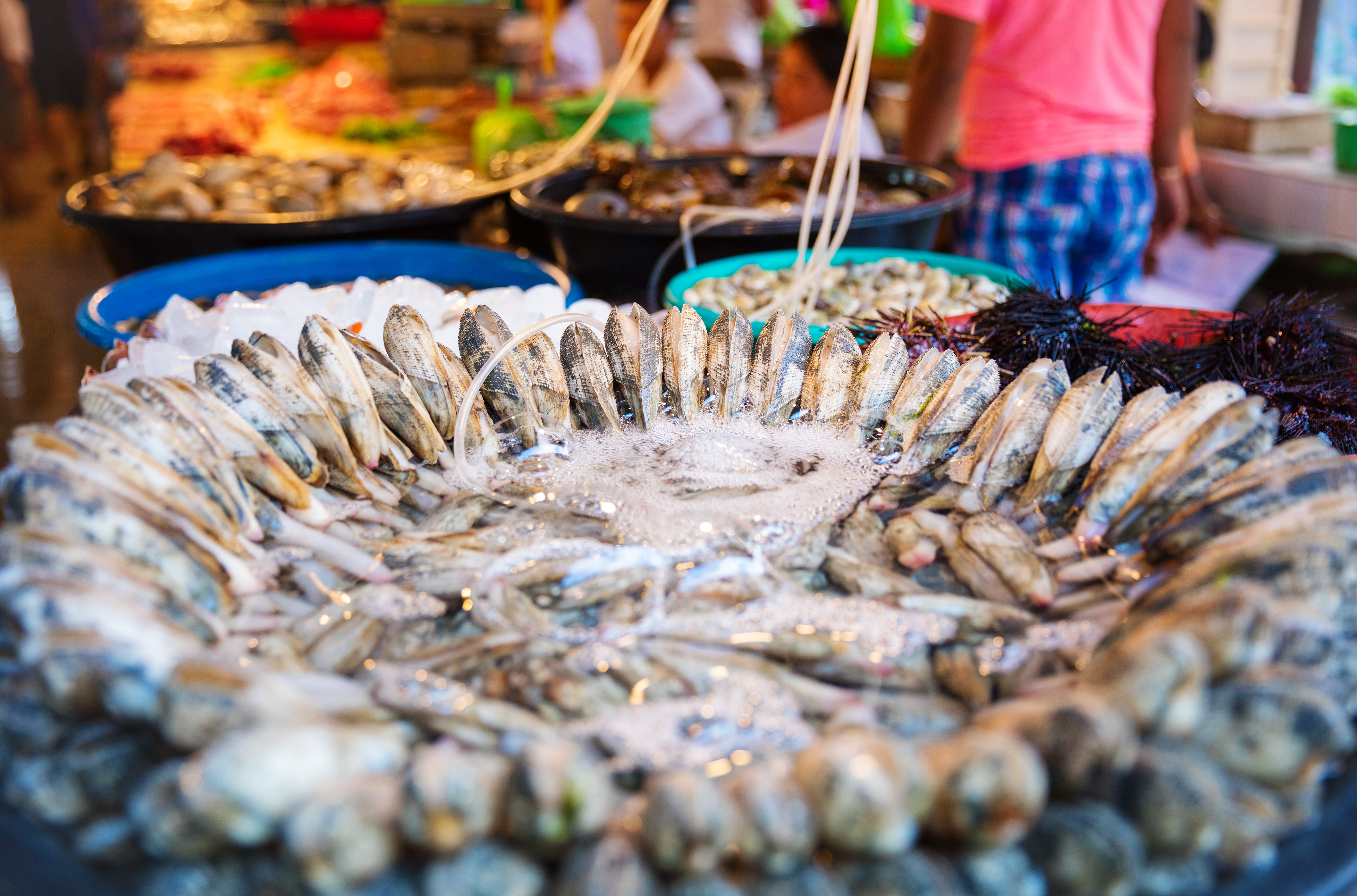 Shellfish for sale at an Asian market