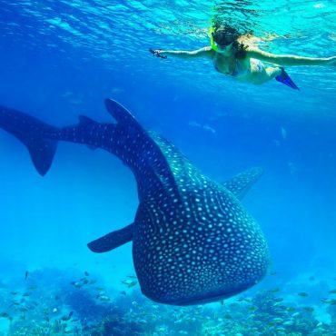 Oslob Whale Sharks Watching
