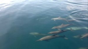 Dolphin Watching(Bais City)