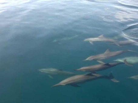 Dolphin Watching(Bais City)