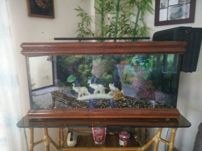 AQUARIUM 47 GALLON // 178 LITERS — size 89 x 50 x 47 cm // with or with out stand SOLD