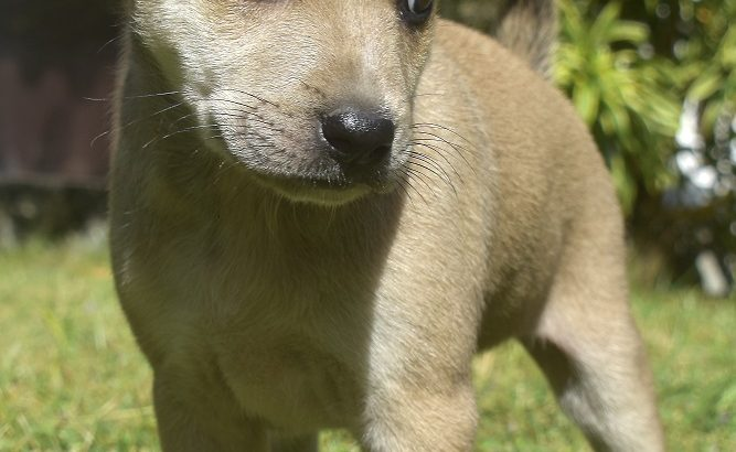 Gorgeous puppies FREE for adoption