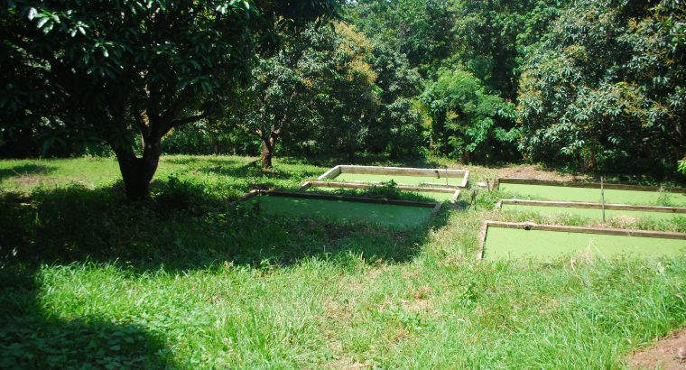 FARM FOR SALE IN NEGROS