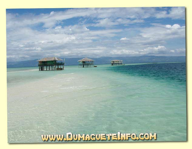 Dolphin and Whale Watching - Dumaguete Info
