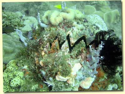 diving balicasag