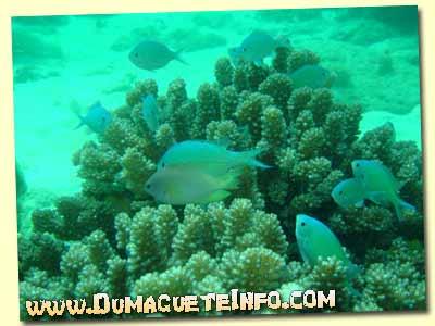 sumilon diving