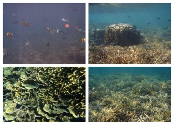 Marine Sanctuaries in Dauin, Negros Oriental