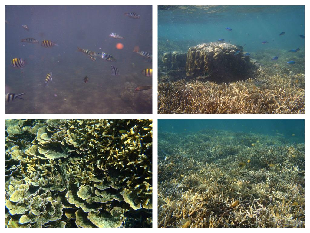 Marine Sanctuaries in Dauin, Negros Oriental